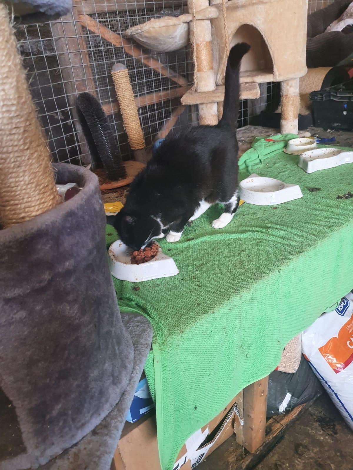 Amazing Response to Donation Request | Freshfields Animal Rescue
